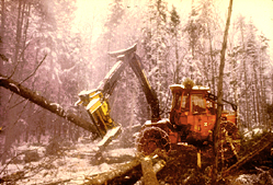 Maine Natural Resource Industries Photography - Logging Feller-Buncher