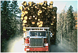 Maine Natural Resource Industries Photography - Logging Truck