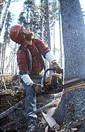 Maine Natural Resource Industries Photography - Maine Logger